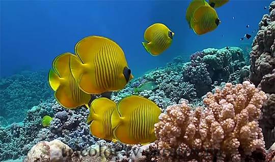 morskoi hd